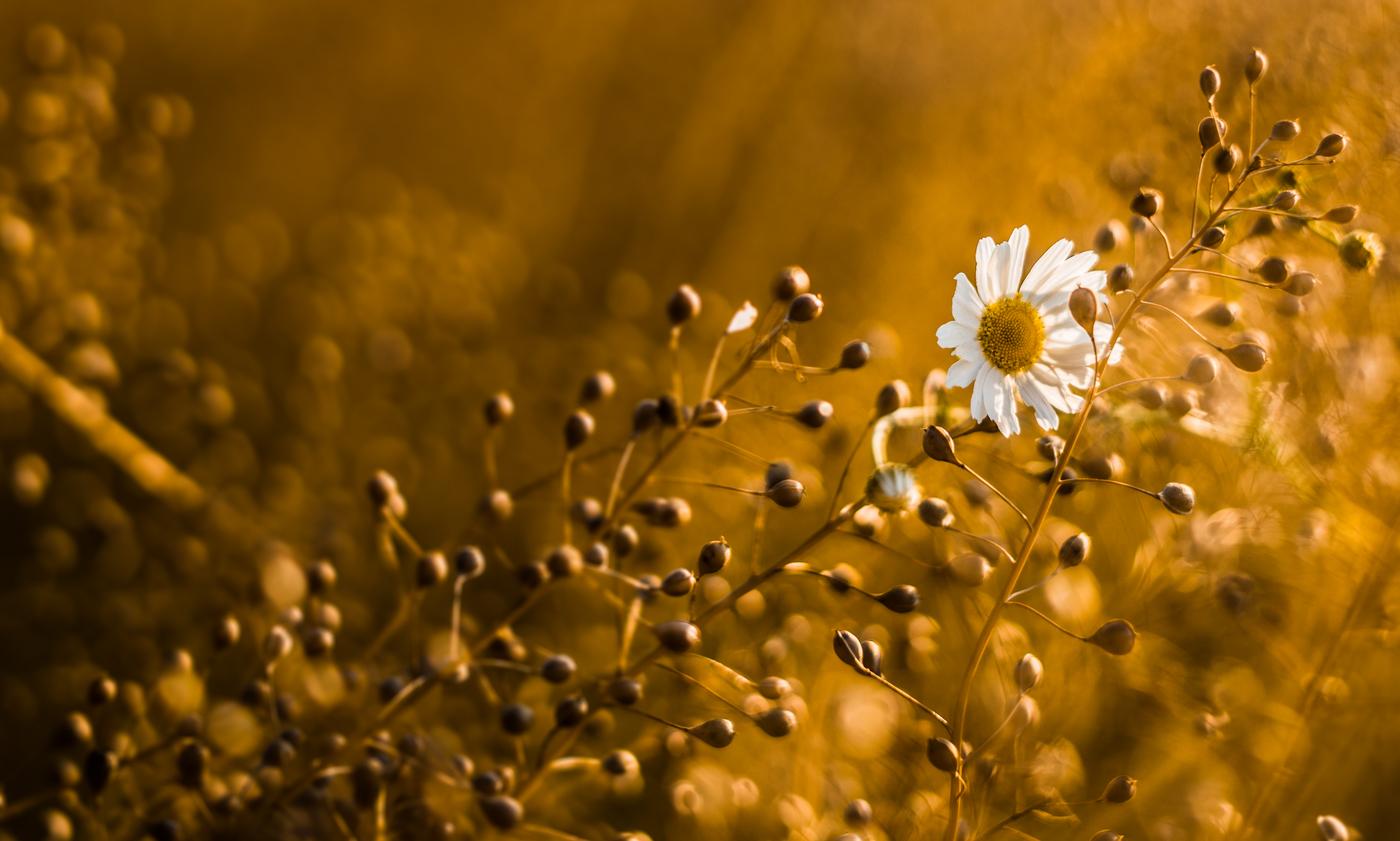 Ztracený květ