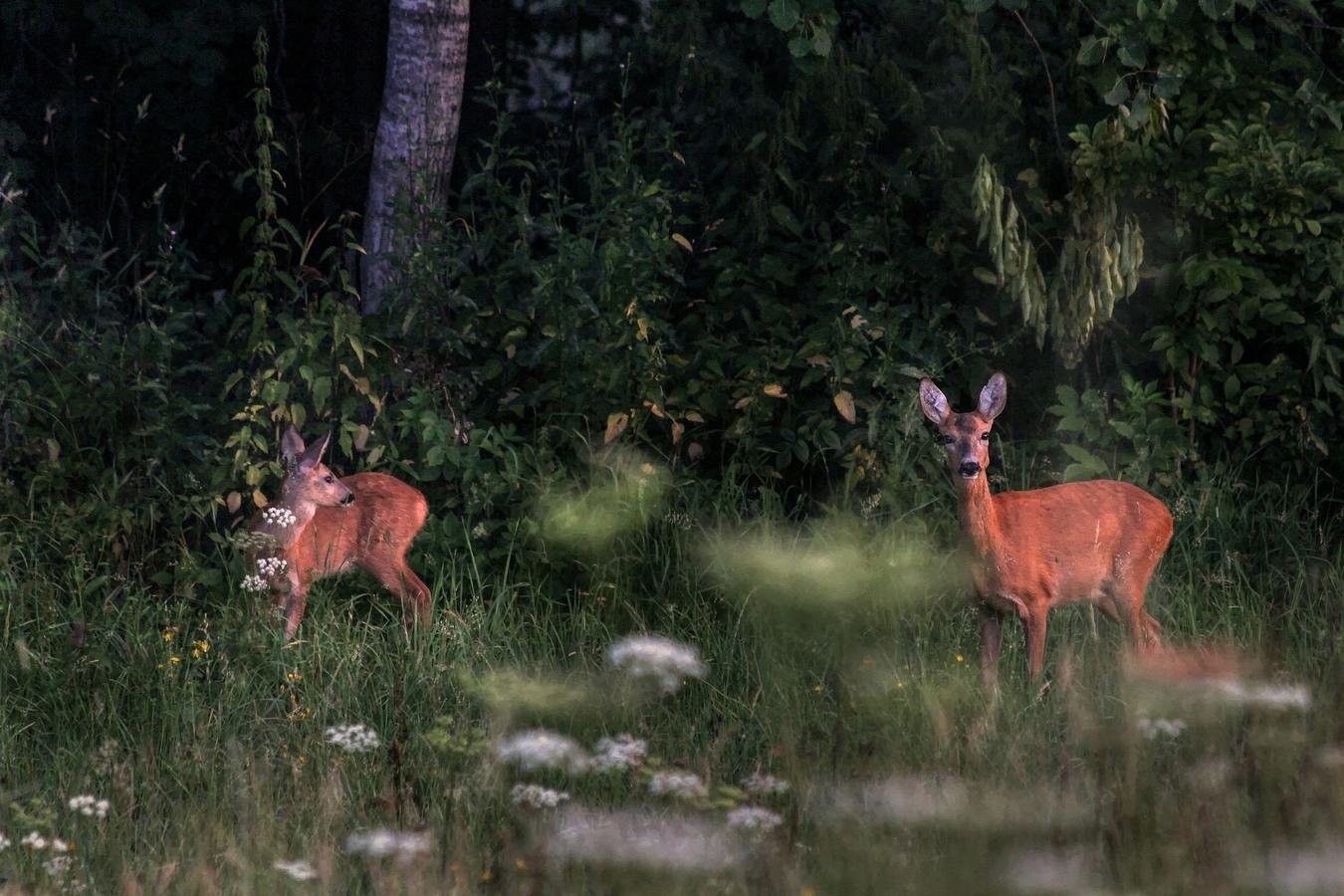 Ráno pri lese