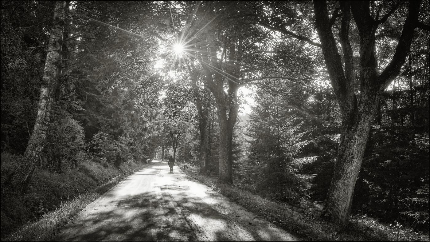 Sluneční cesta