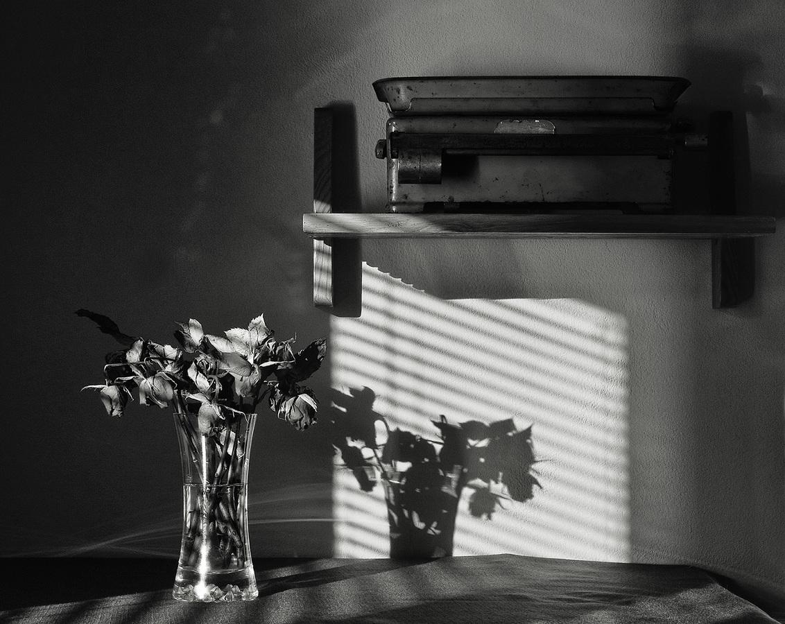 Broken Flowers XI.