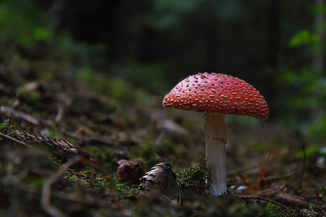Lesná ozdoba