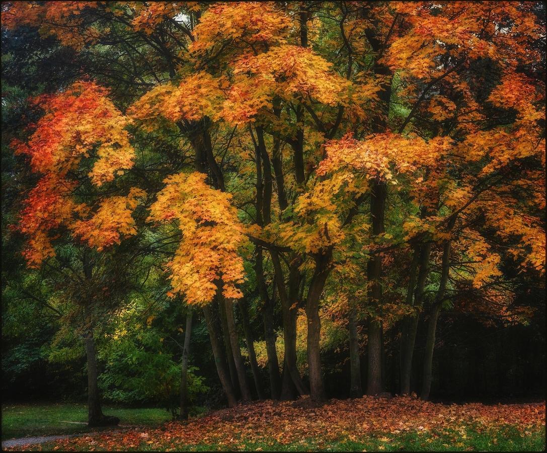 Oranžový podzim