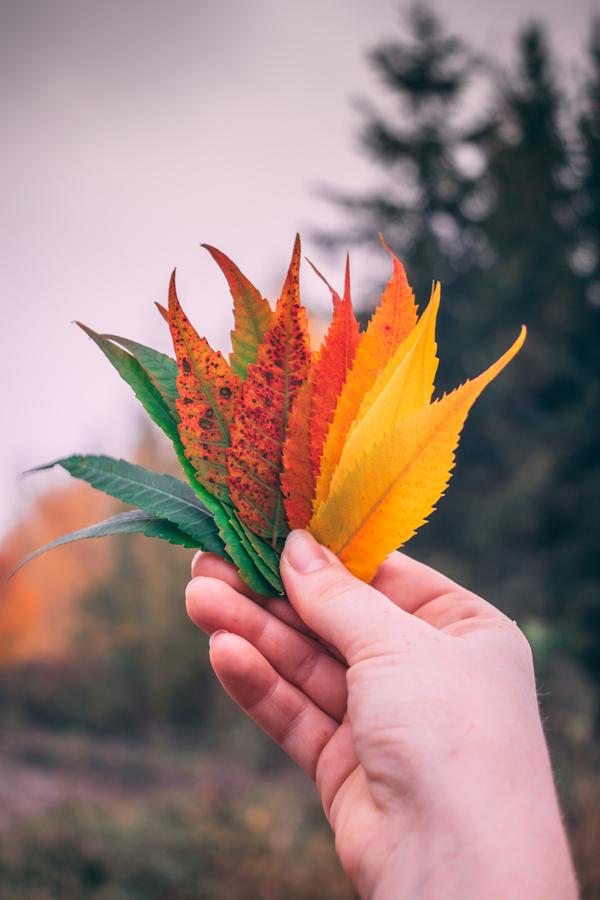 Hravý podzim