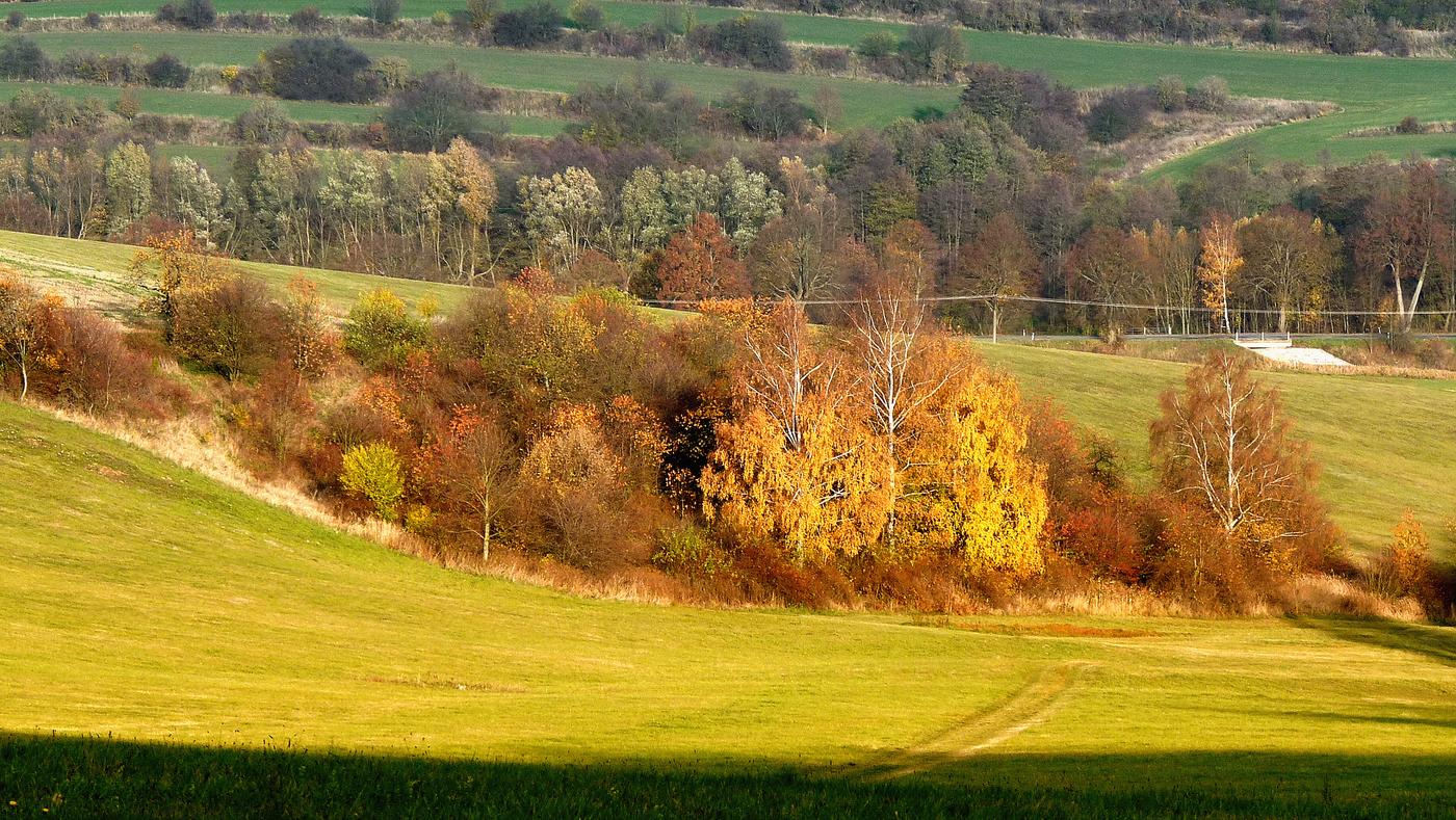 Podzimní remízek