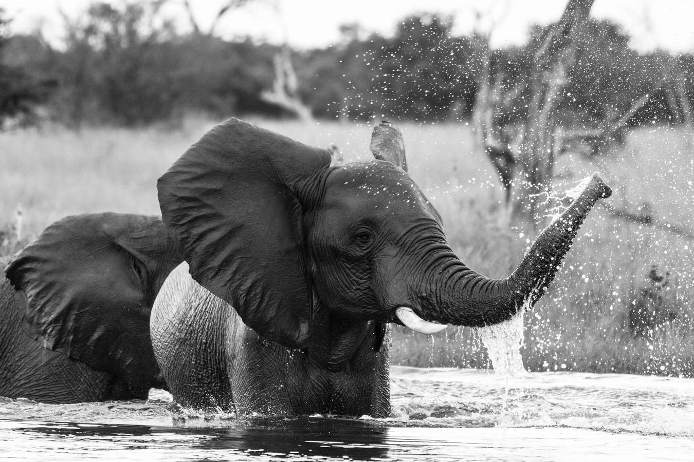 Čas sloních her