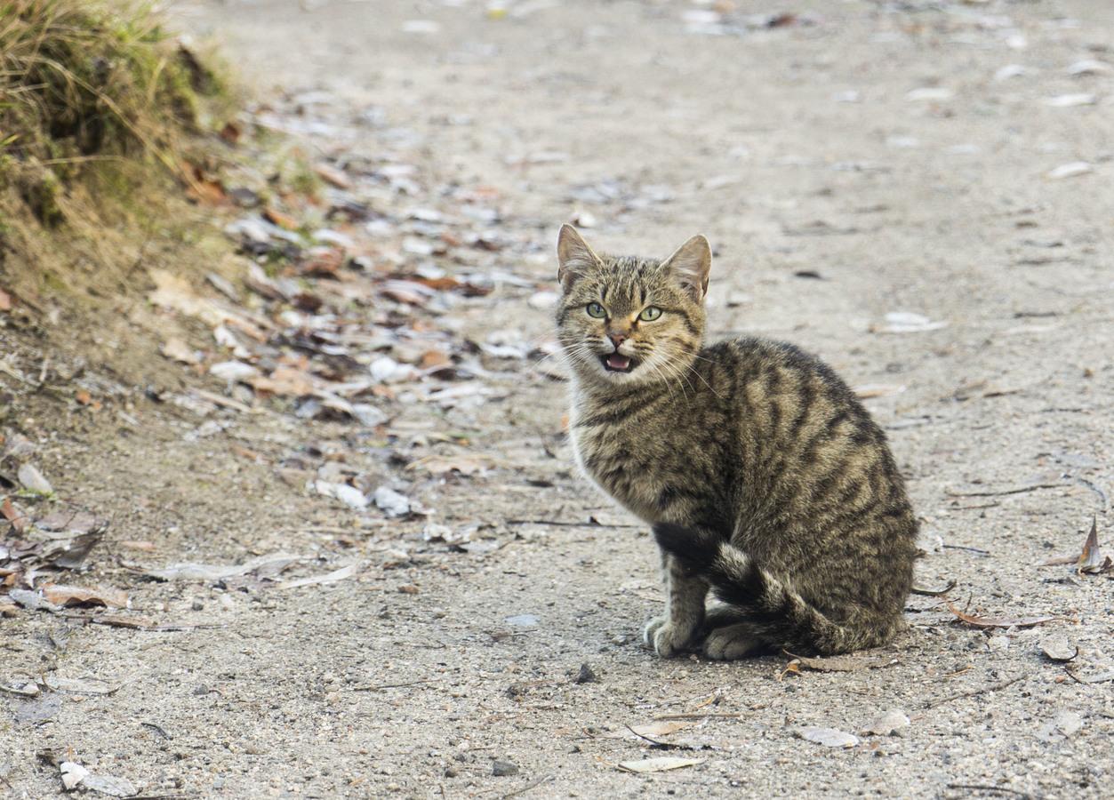 Kočičák na cestě