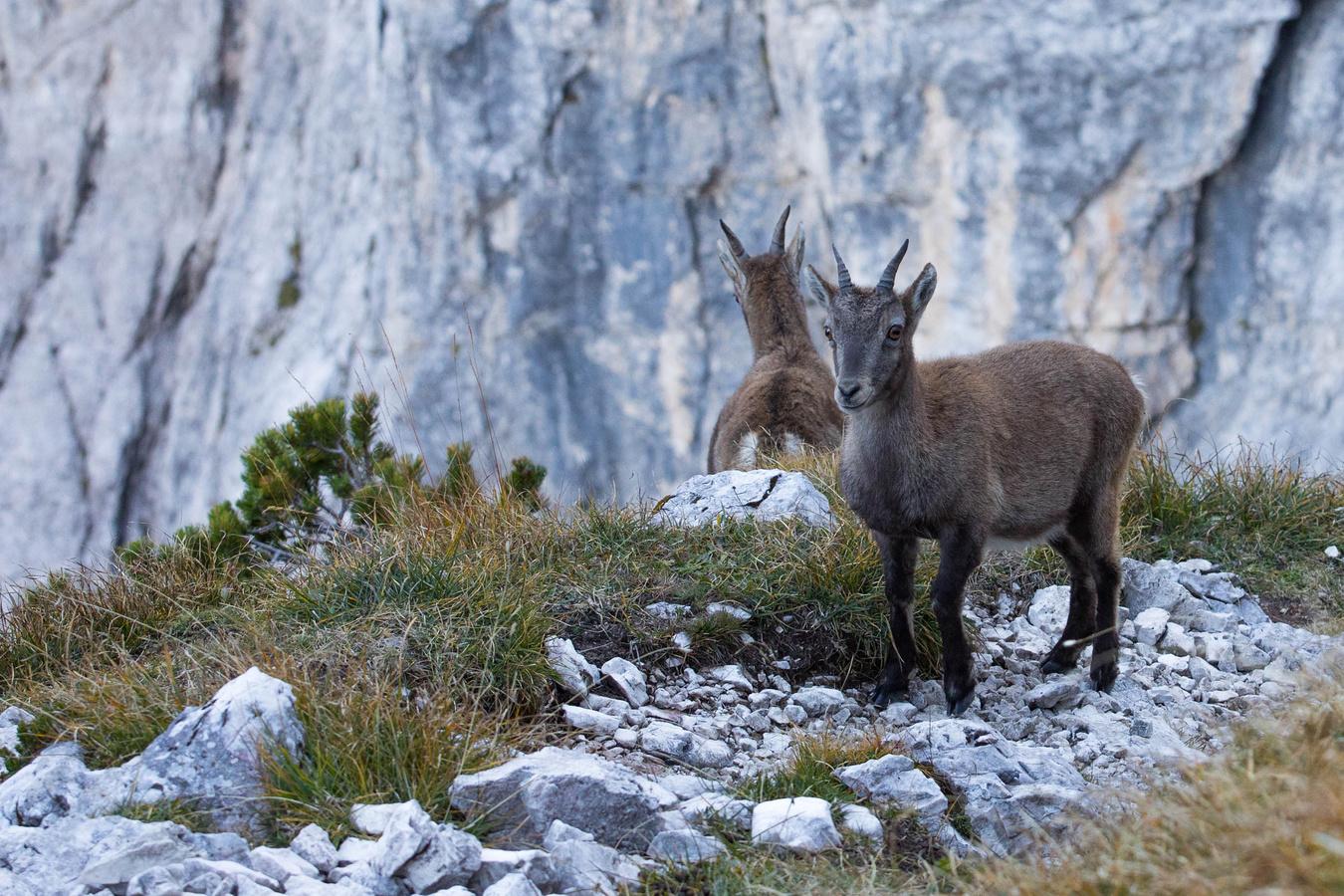 Kozoroh-Julské Alpy