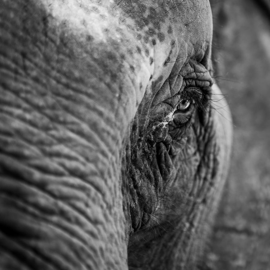 Slon nezabúda
