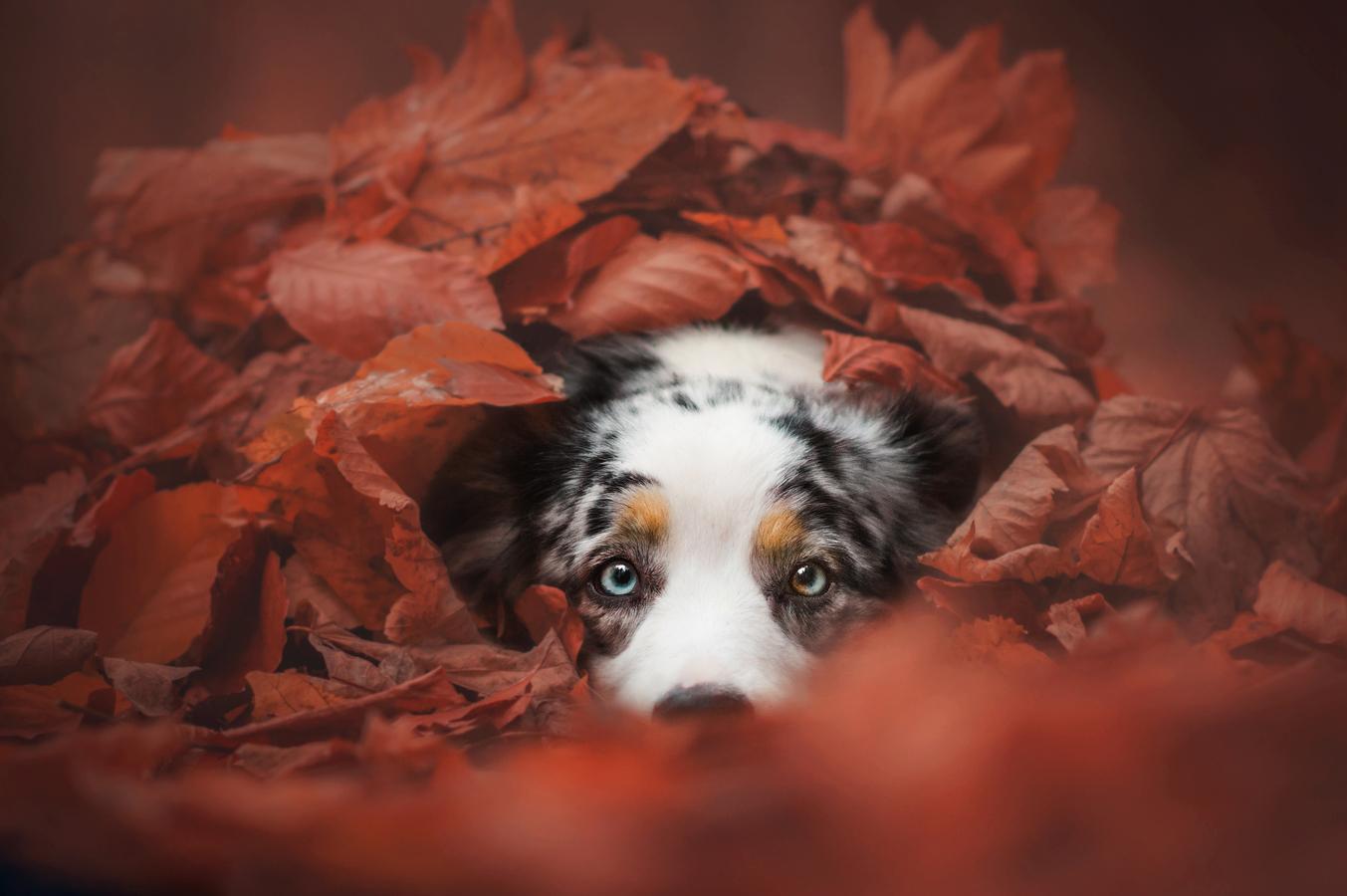 V listí