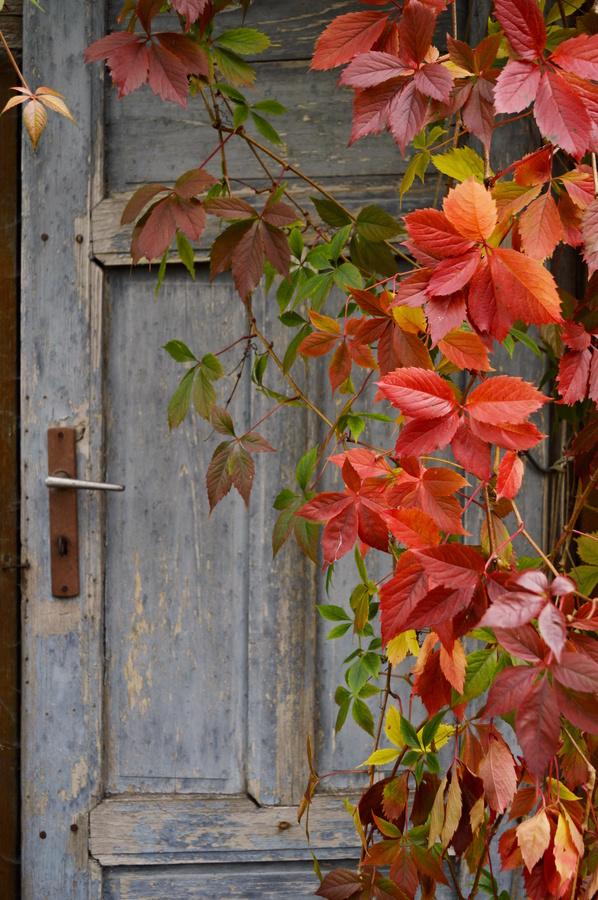 Tajemství za starými dveřmi