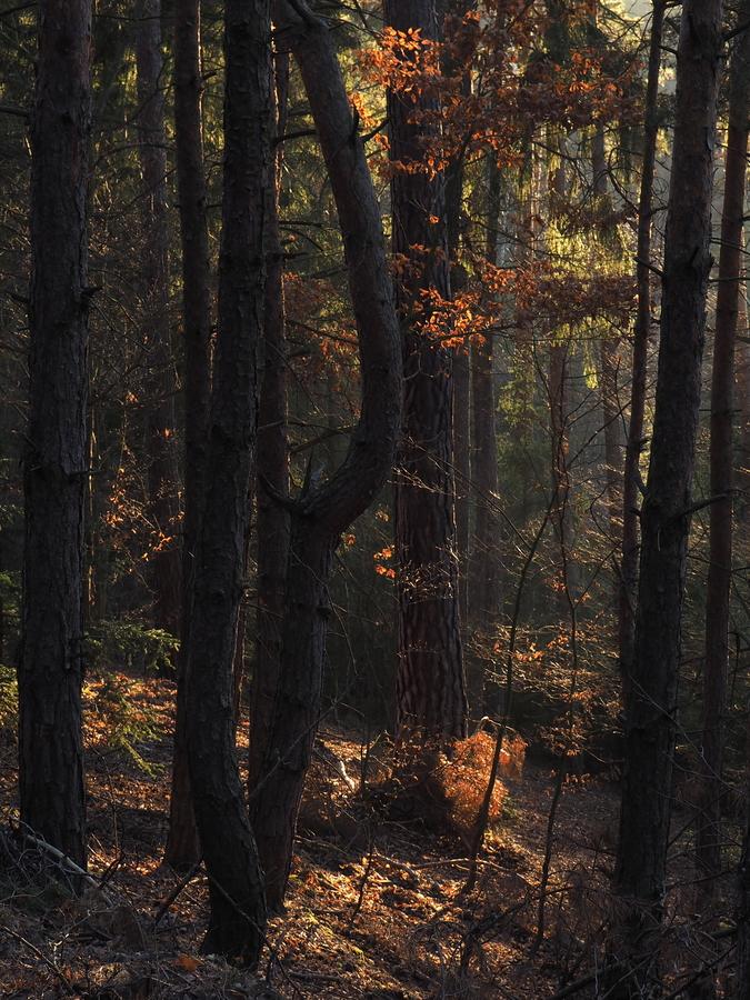 Barvy v lesní houštině