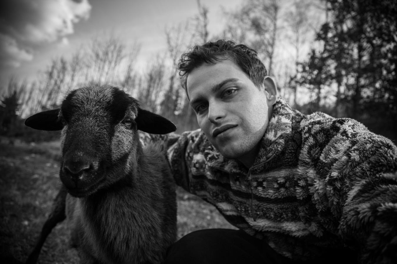 Selfie s ovcí