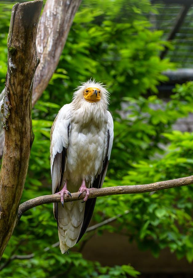 Pták ohnivák :-))