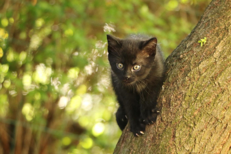 Poprvé na stromě