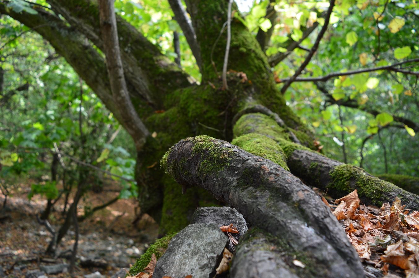 Zakroucené kořeny