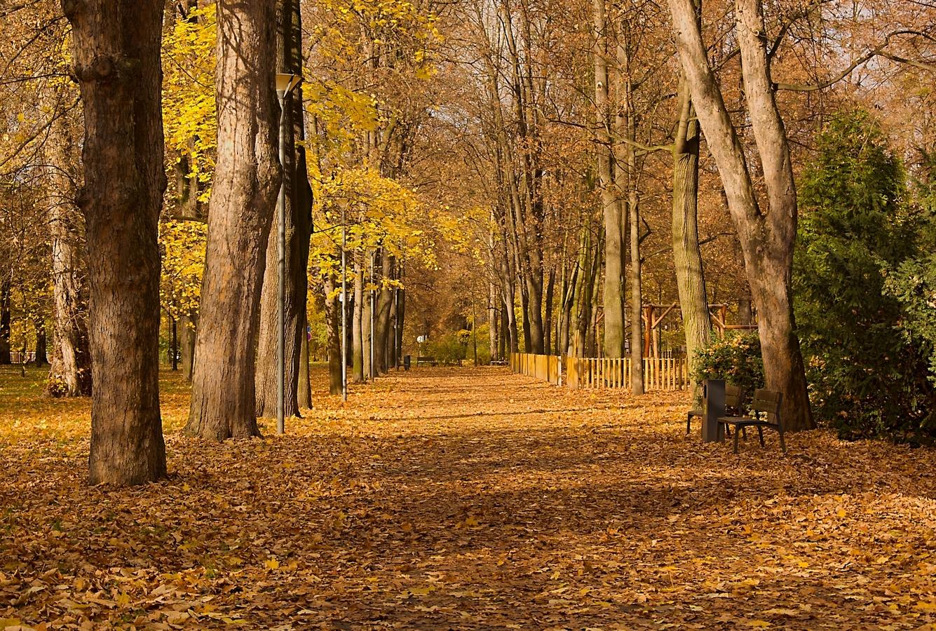 listopadový park