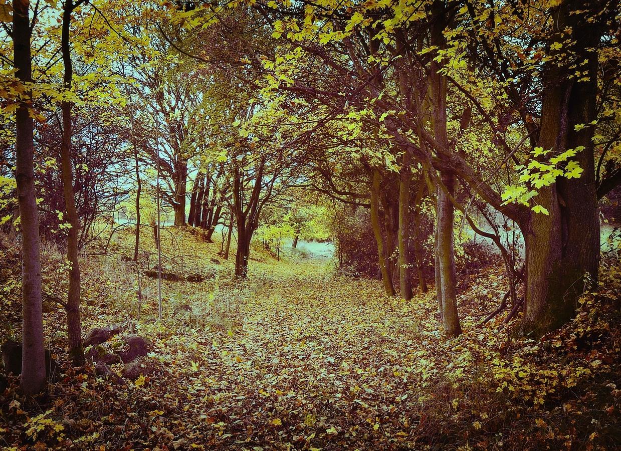 Po cestách podzimu