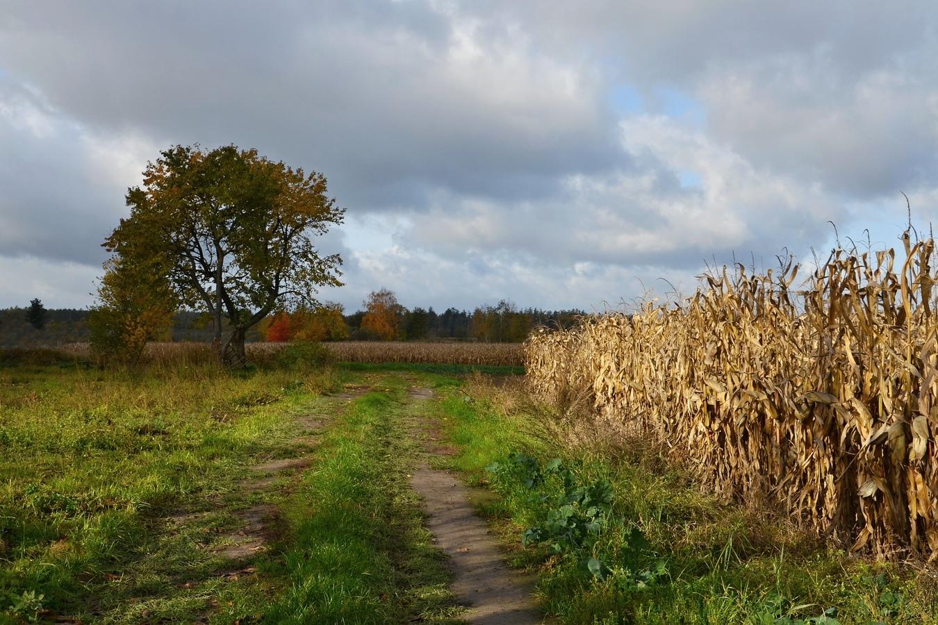 Podzim za vesnicí