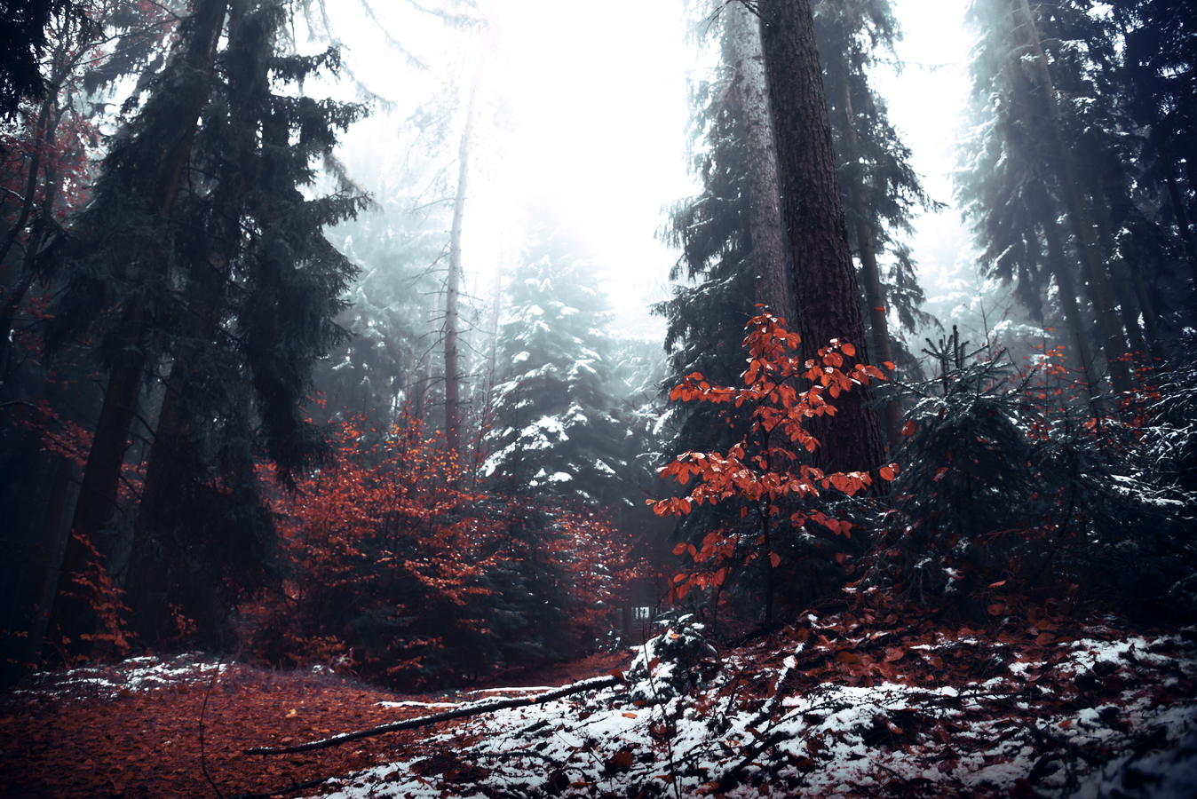 Ráno v temném lese