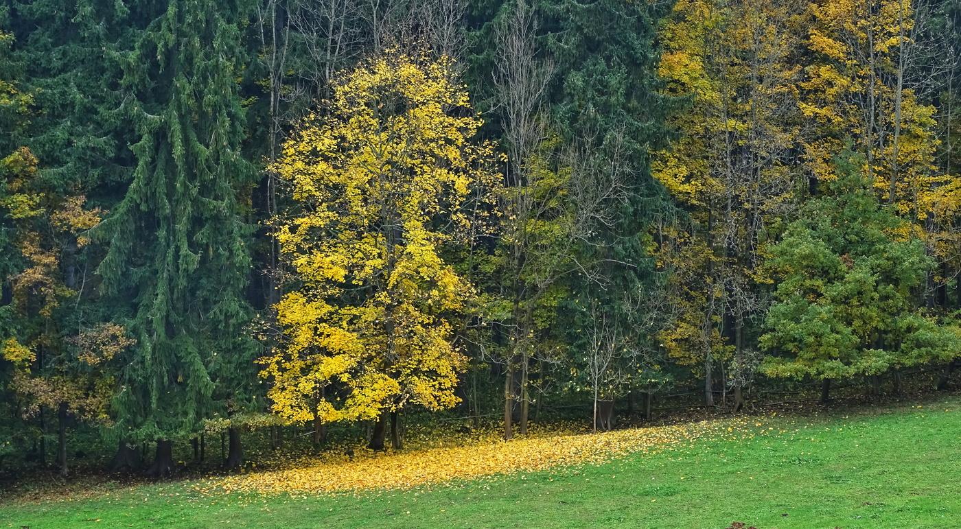 Barevná kouzla podzimu