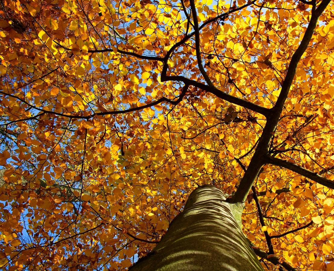 Podzimní úhel pohledu
