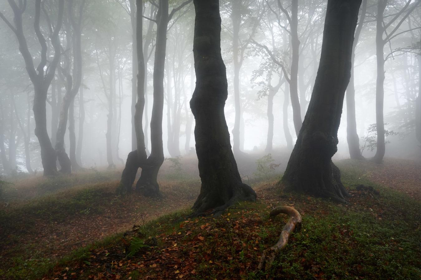 Sloupy lesního chrámu