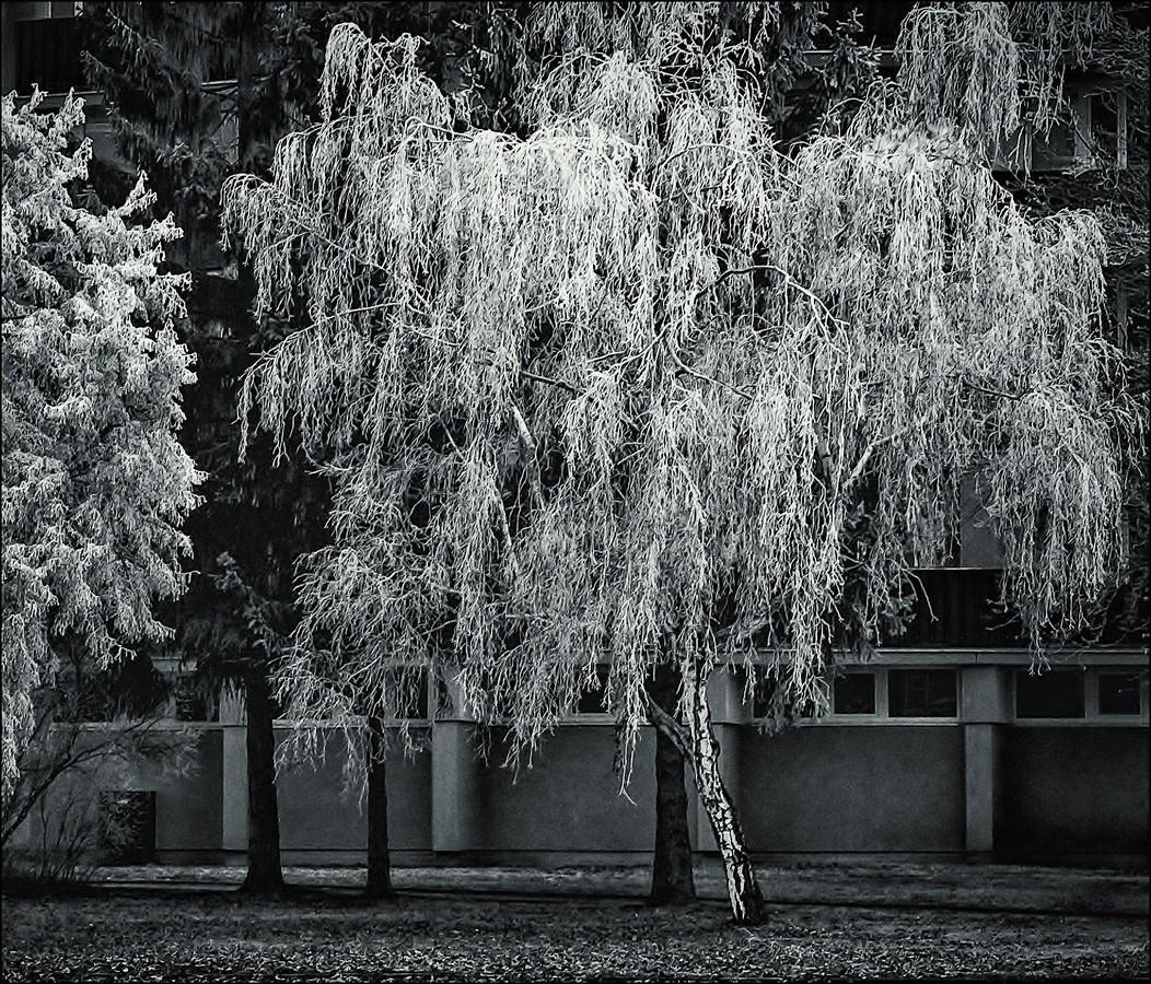 Městská zima