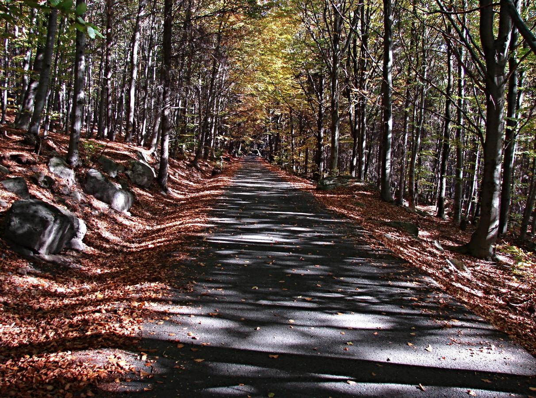Cesta k podzimu 2