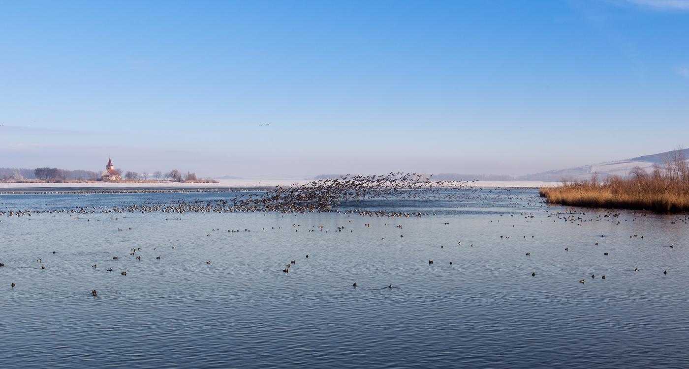 Ptačí zimování