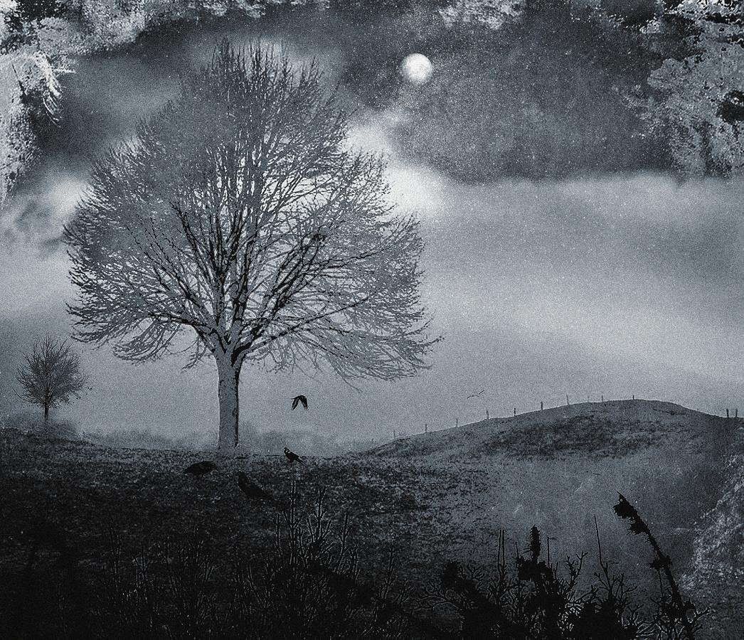 Opuštěné pastviny-/fotografika/