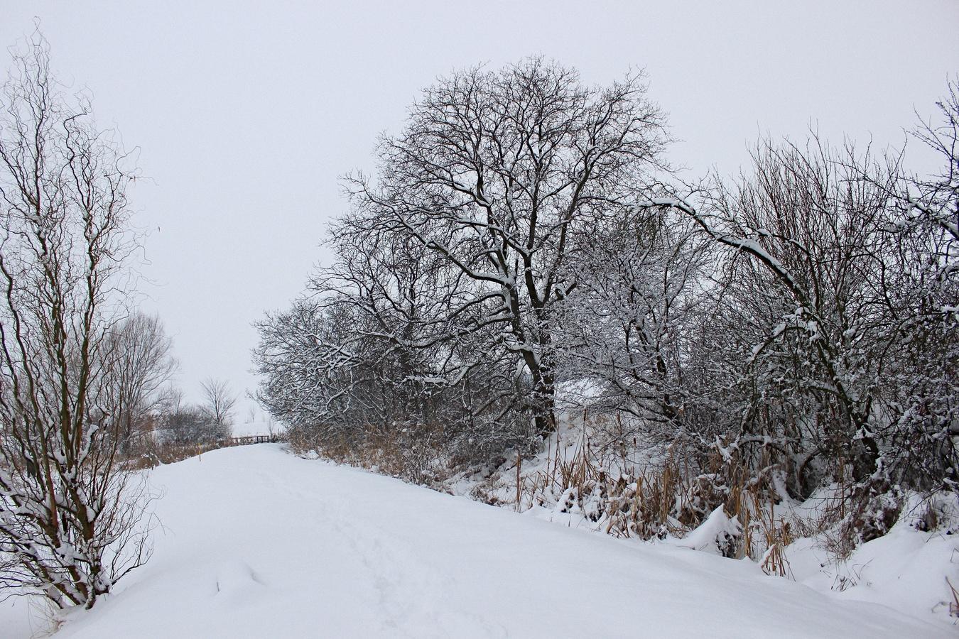 Krása zimy - cesta kolem rybníka.