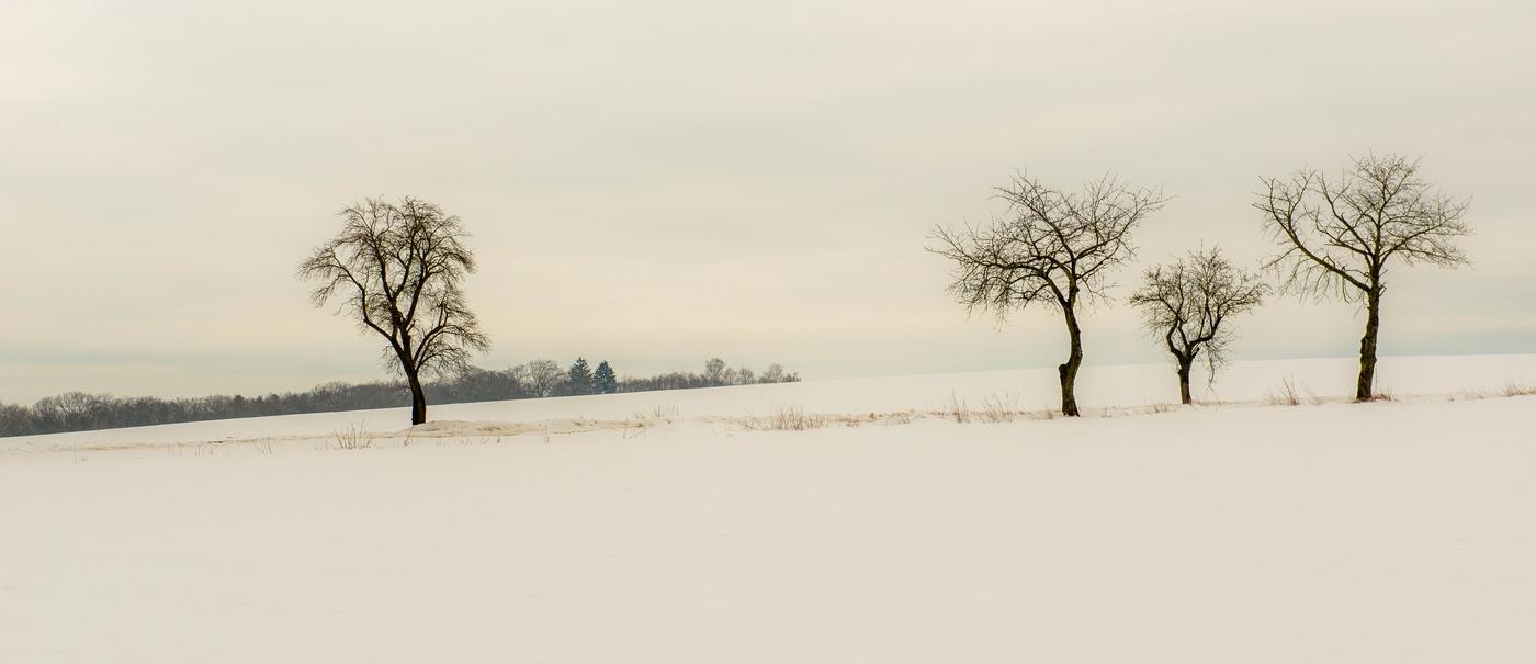 Stromy u cesty