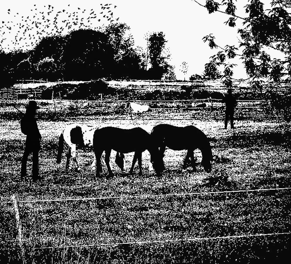 Jak koně a stáj,tak voní náš kraj ..../fotografika/
