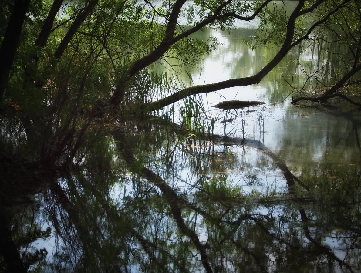 U rybníků