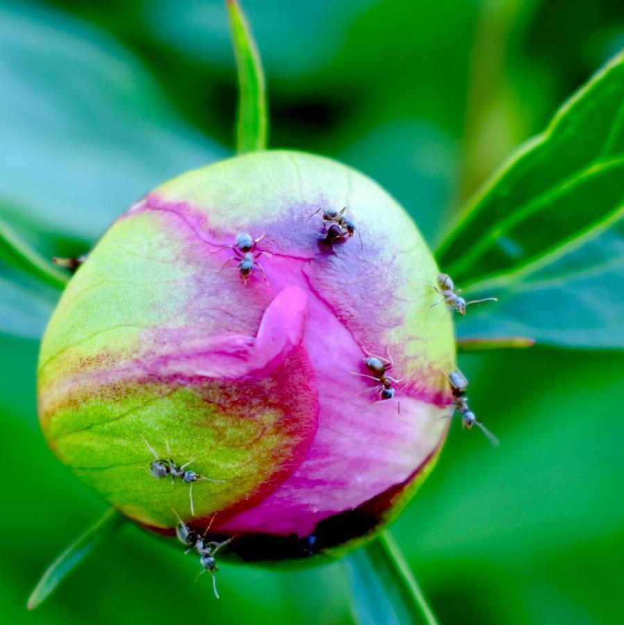 Planeta mravenců