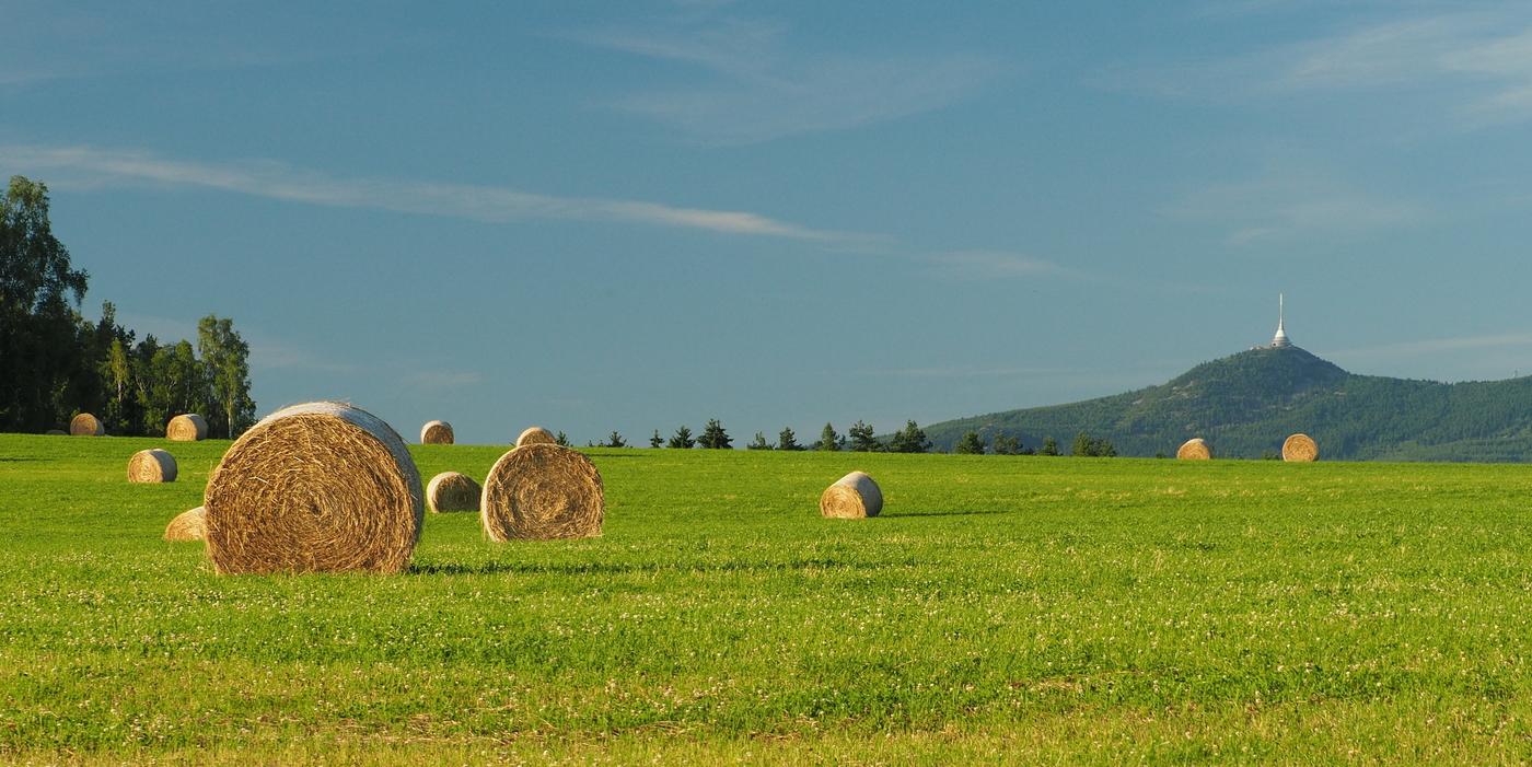 Pole s balíky trávy a Ještěd.