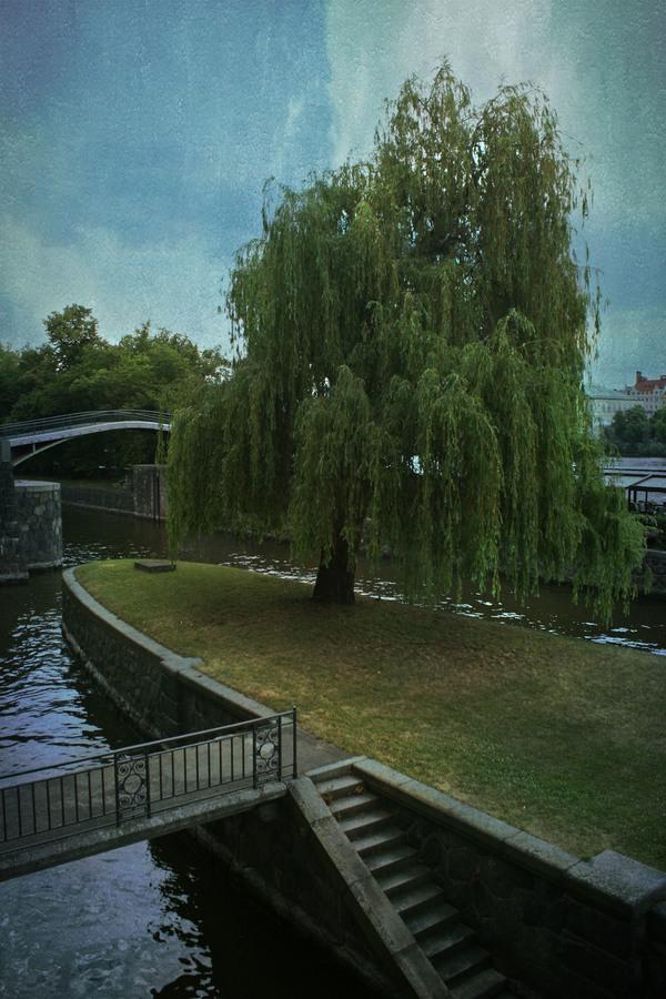 osamela vrba na naplavce Praha