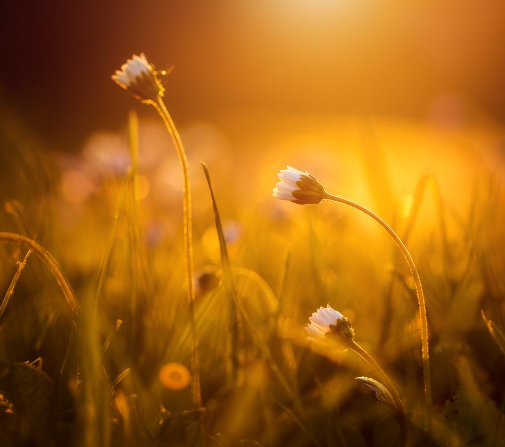 -- Jarní soumrak --