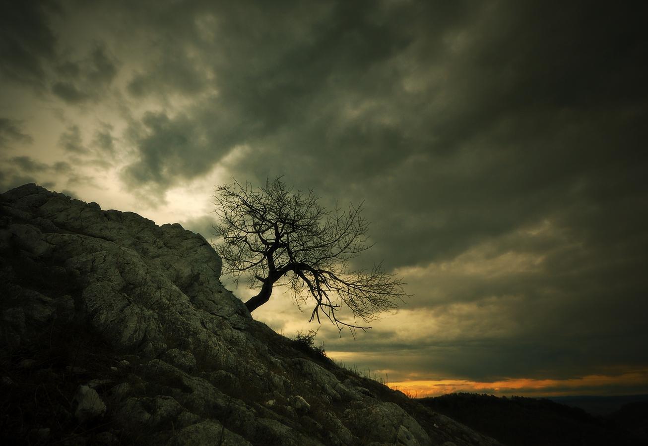 Pálavské stromy 5