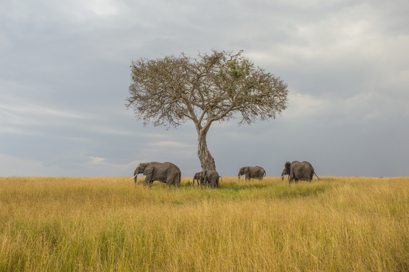 Sloni ve stínu stromu