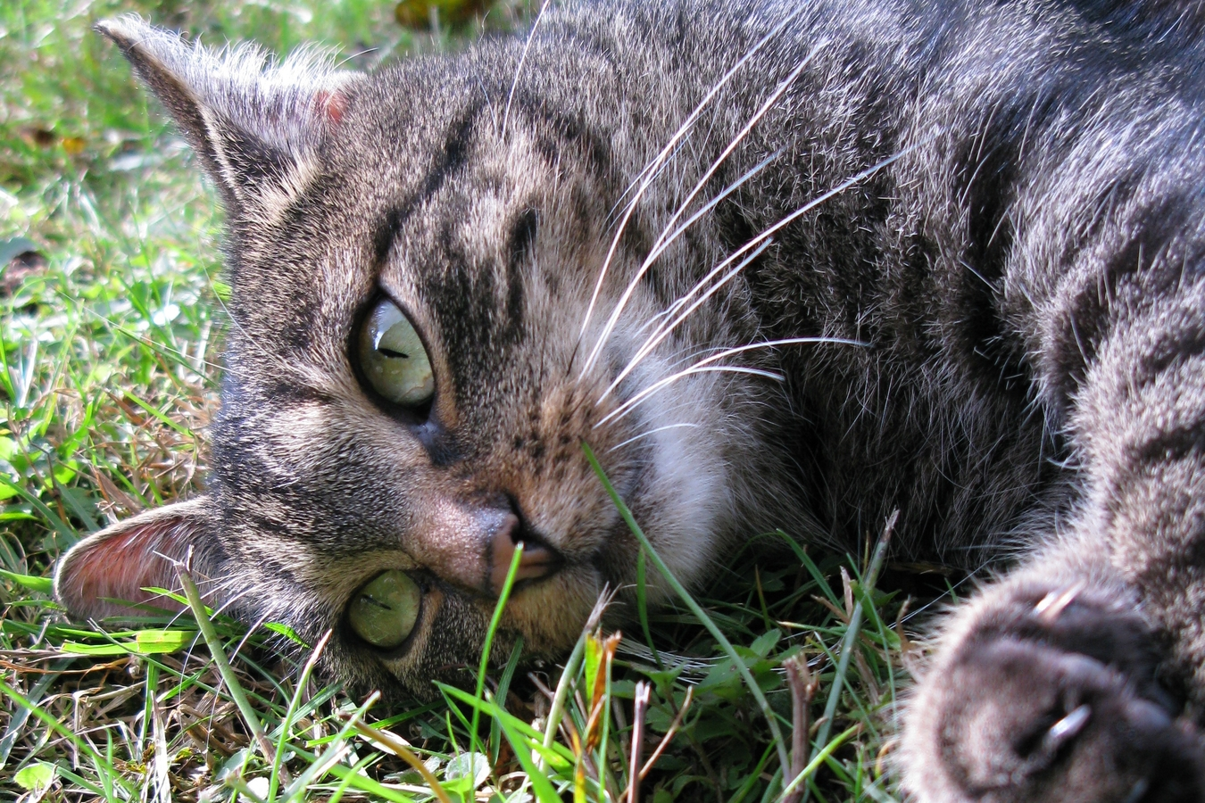 Oči kočičí