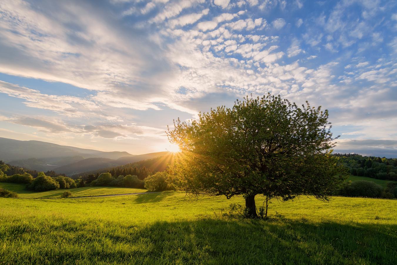 Slnečné ráno