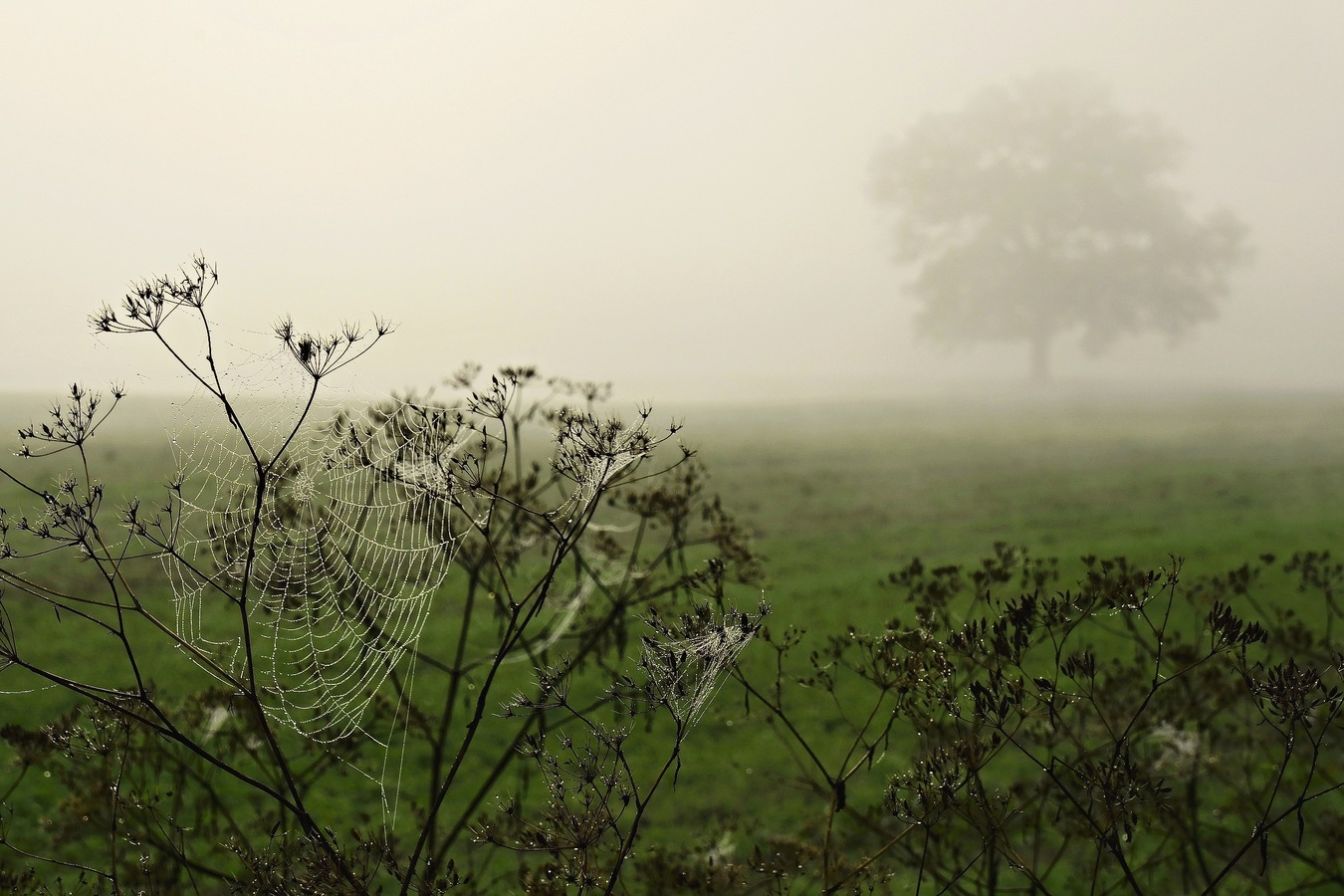Podzimní mlha