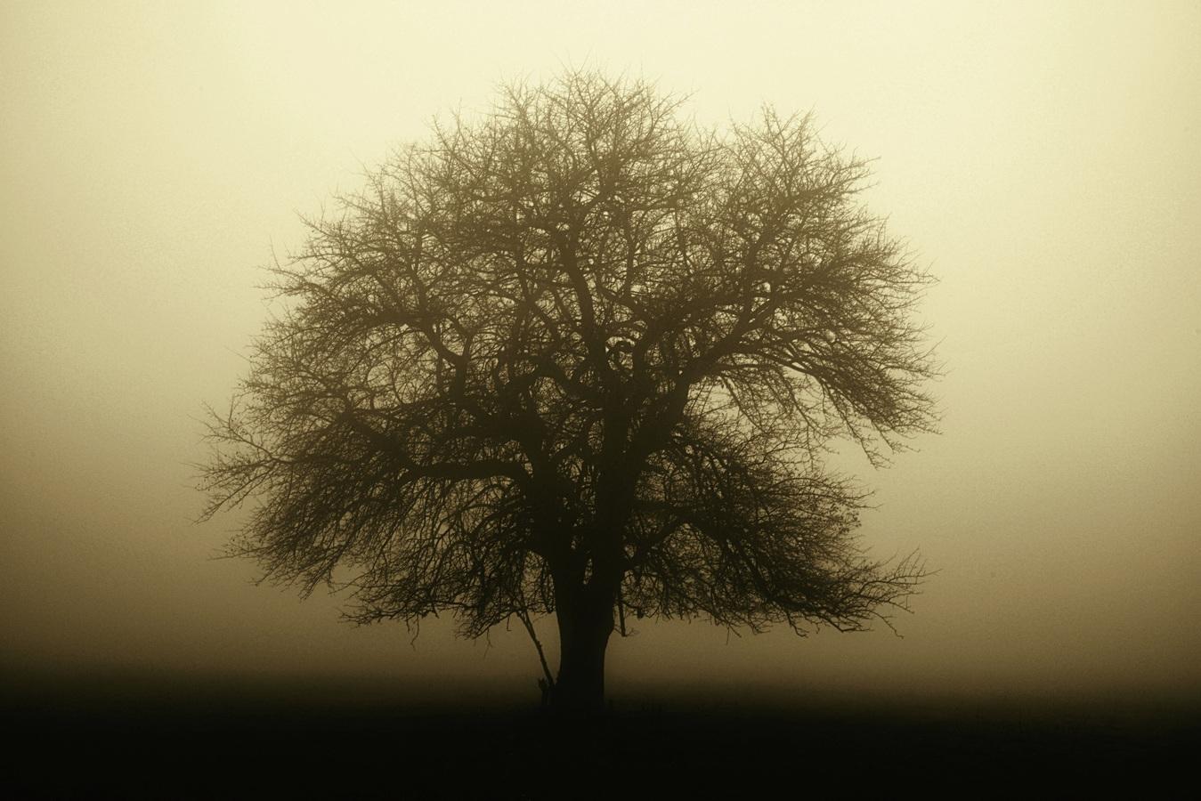 Karpatské mlhy