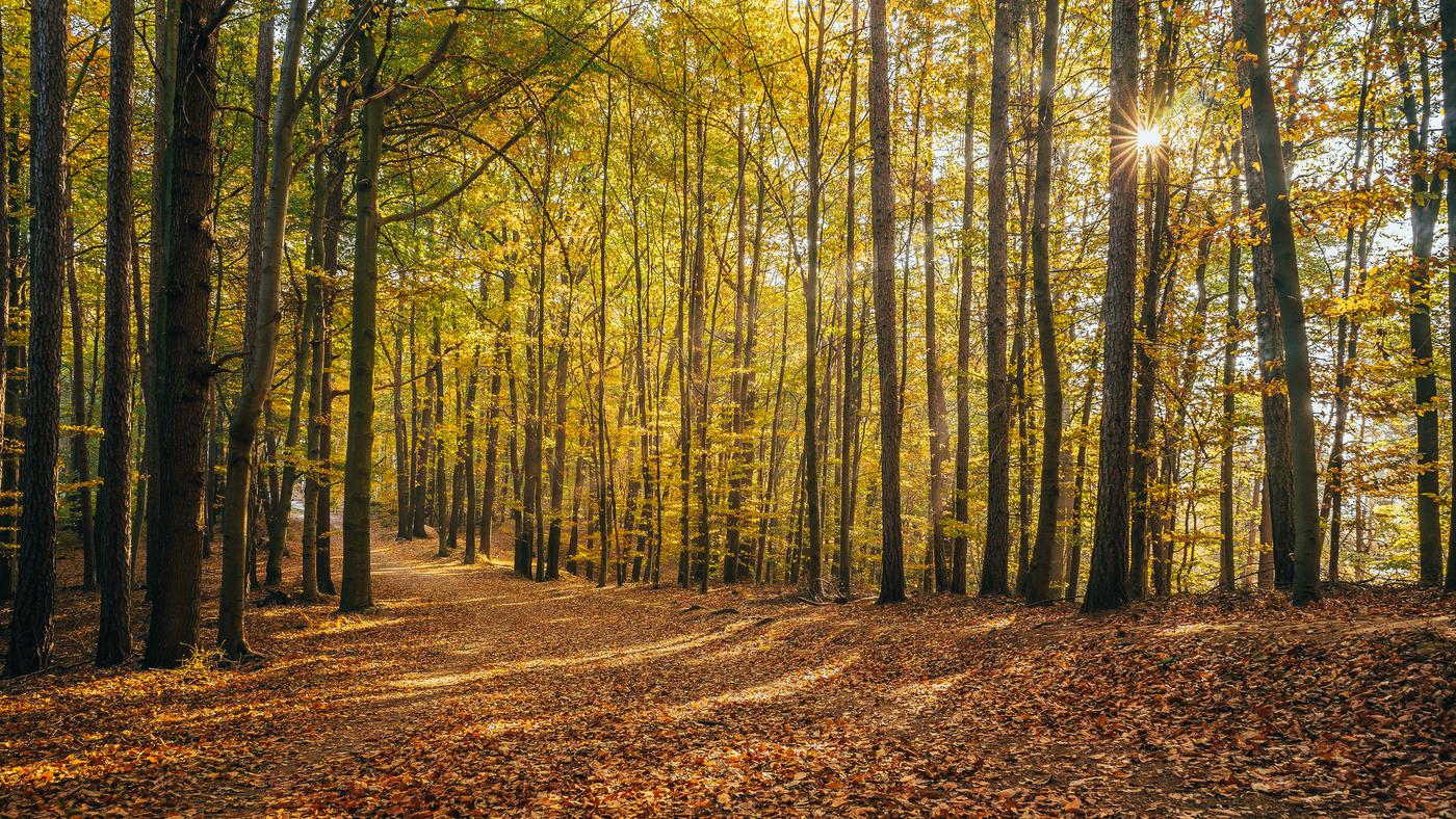 Dopoledne v lese