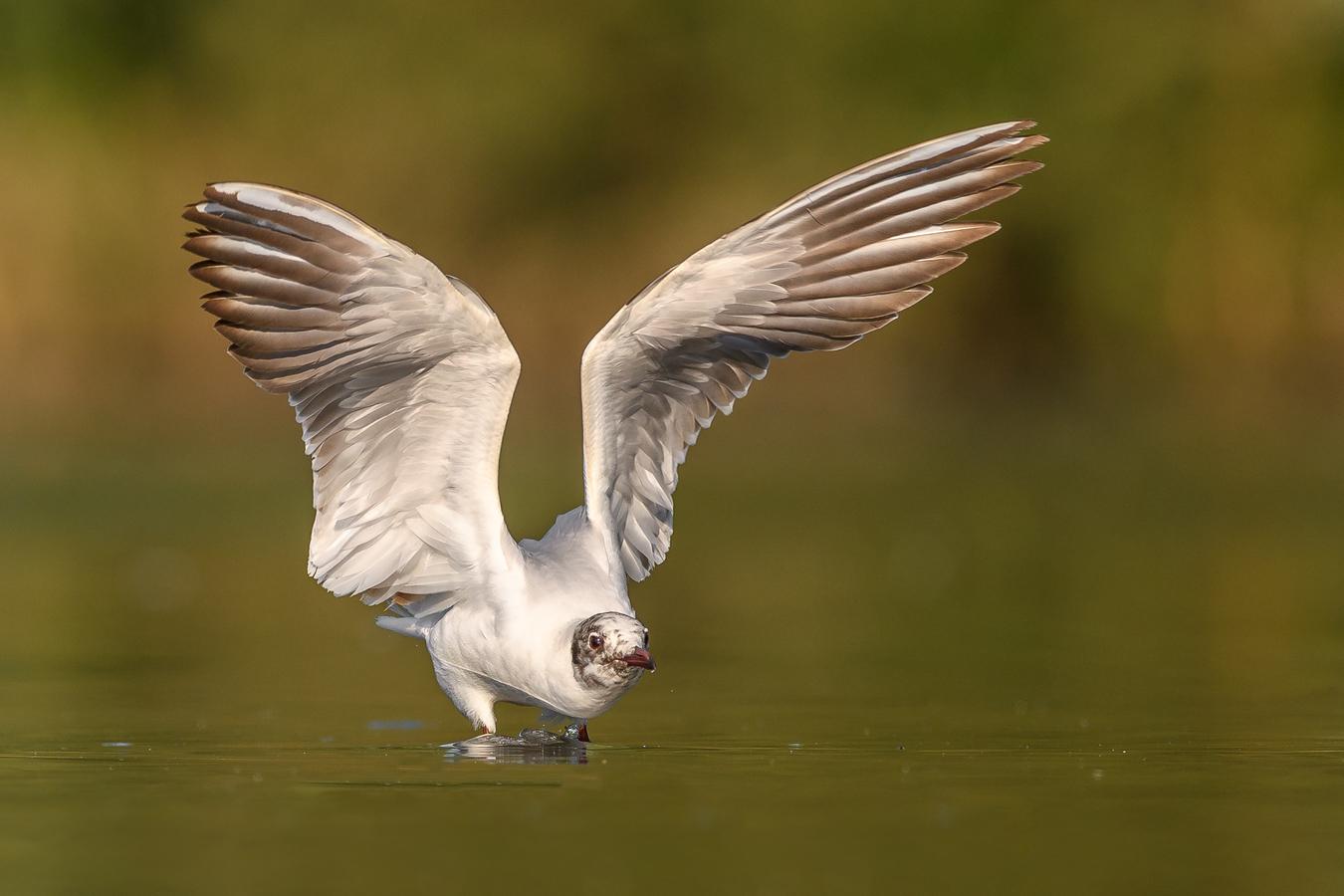 To jsou křídla ...