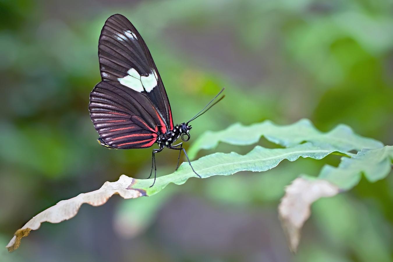 V motýlím domě