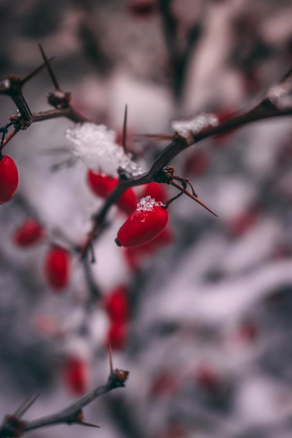 První letošní sníh v Krnově