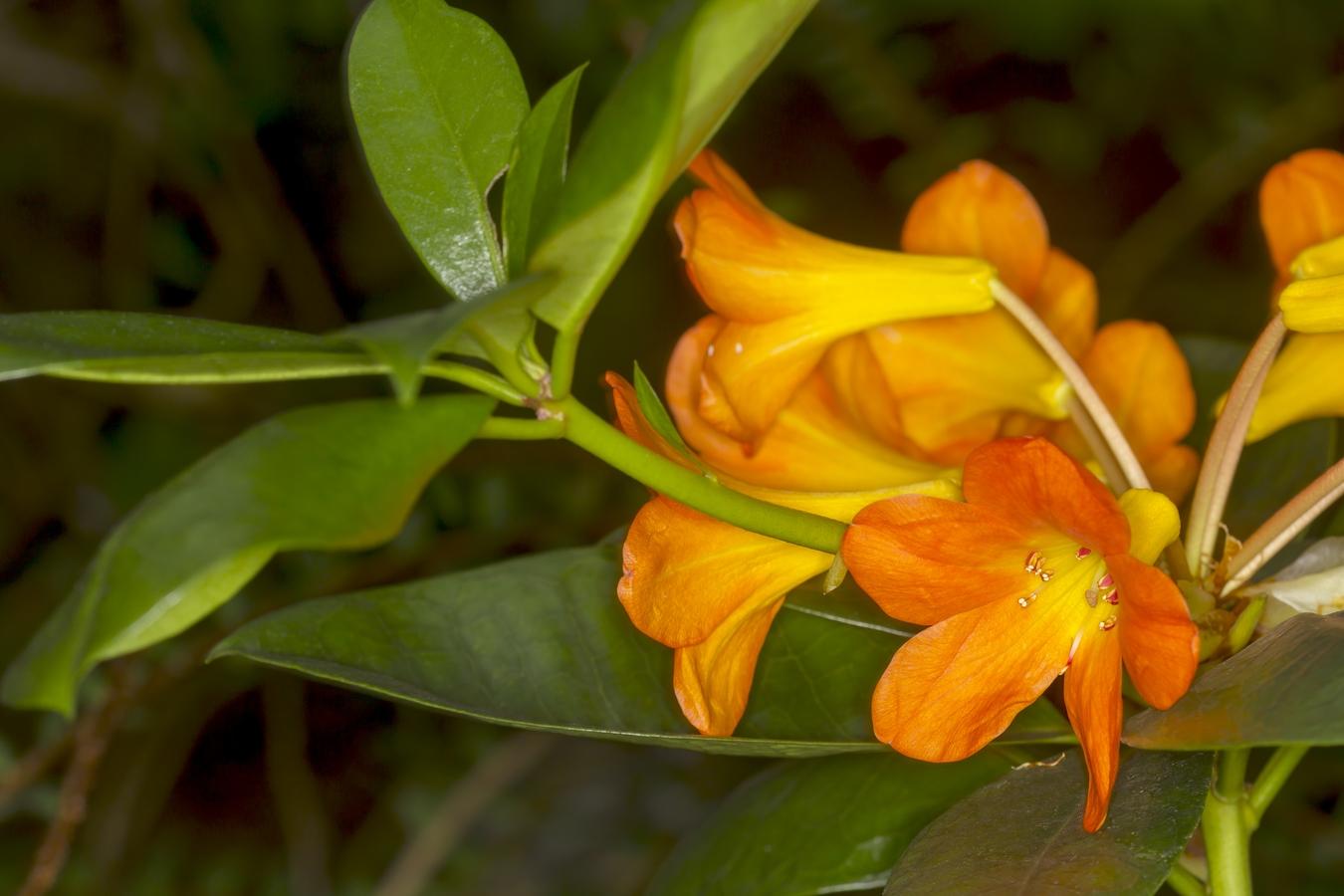 něžné květy