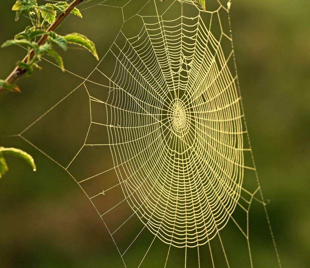 Pavoučí past